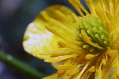 flower-n-miteIMG_0251-scaled