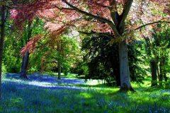 bluebellwoods